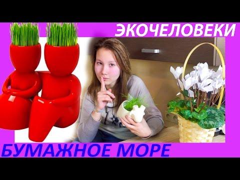 России нужны собственные качественные семена