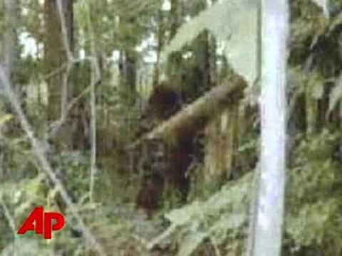 ATL News - Possible Bigfoot Spotted in Northeast Georgia
