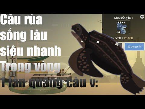 RU11: Cách câu rùa sống lâu và mở khóa map núi lửa và biển   Fishing life #4