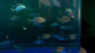 victoria in a fish tank