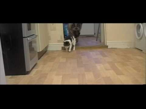 Tiggy the Talking Hello Cat video Outtakes – blooper reel
