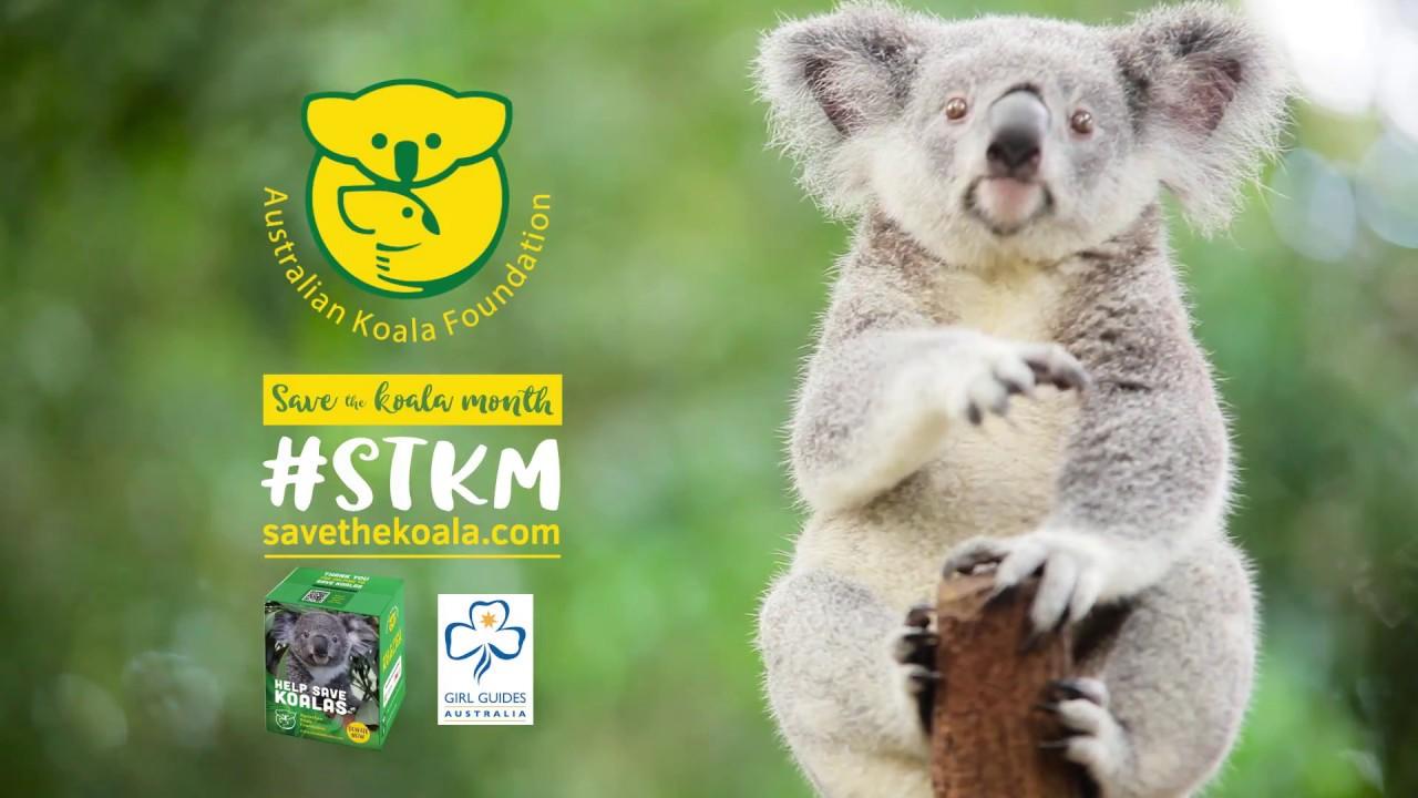 test2 | Australian Koala Foundation
