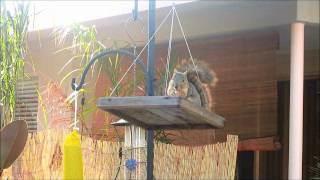 Squirrel Feeder - Do-it-yourself