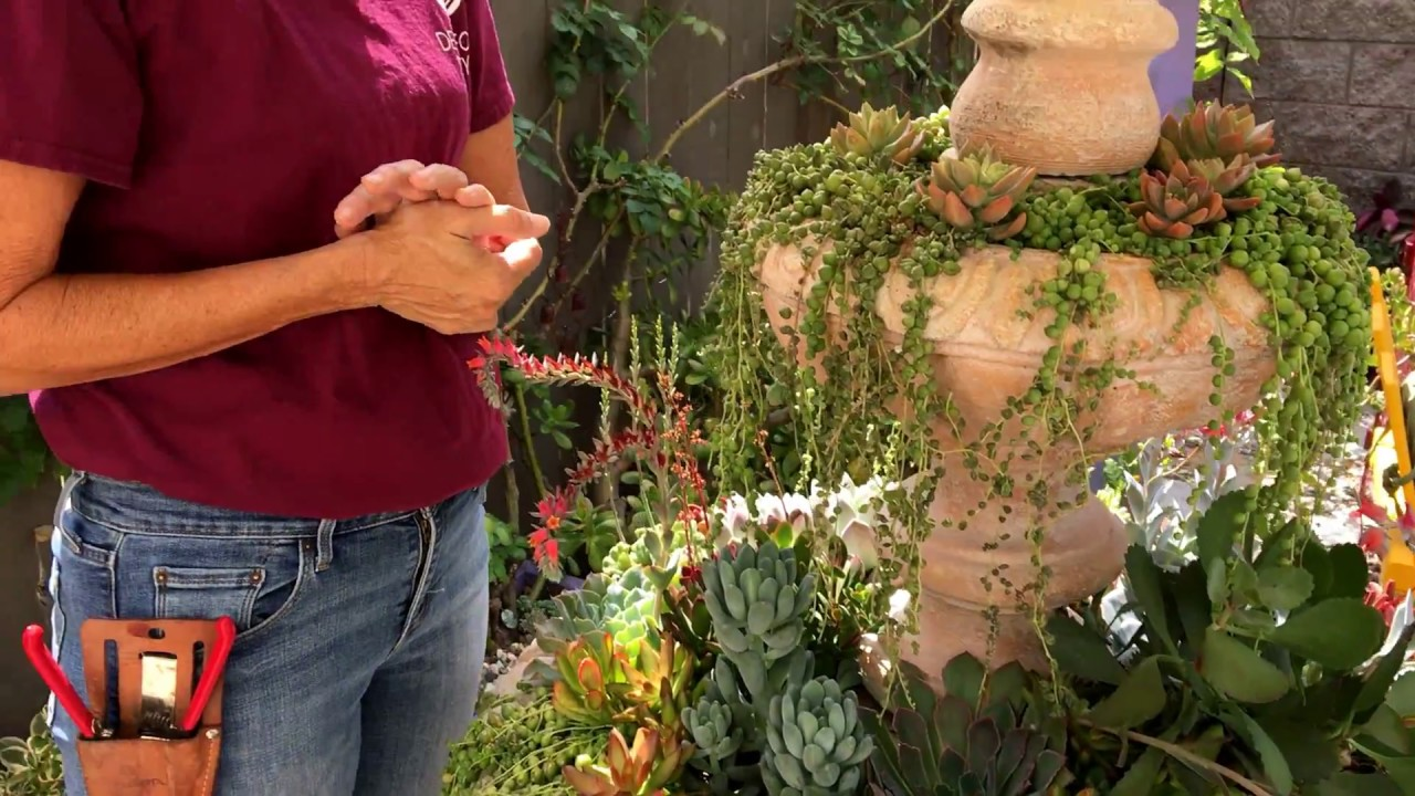 Succulent Fountain Check-up - YouTube