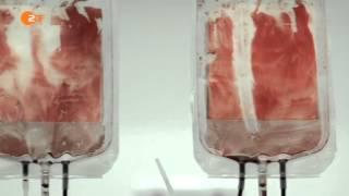Blutgeld - Die Dokumentation