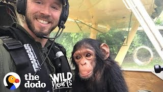This Pilot Flies with Rescued Baby Chimpanzee for the Sweetest Reason | The Dodo Wild Hearts