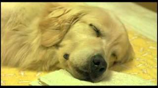 Video 10 Promises To My Dog download MP3, 3GP, MP4, WEBM, AVI, FLV Oktober 2017