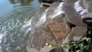 видео Пруды и водопады