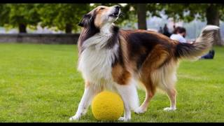 Seattle Dog Training - How To House Train Your New Puppy