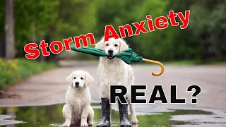 Storm Anxiety in Dogs, REAL?