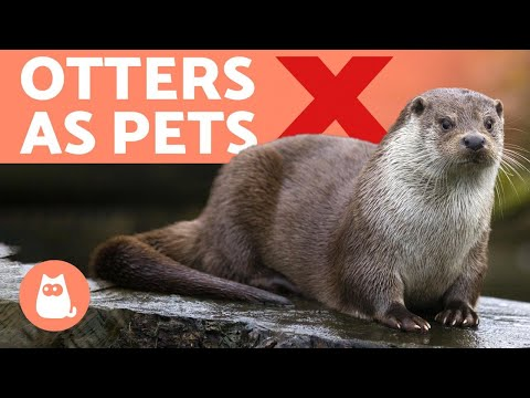 OTTERS As PETS ❌ Why It's A BAD IDEA