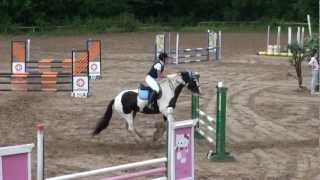 Irish cob Ian jumping 90 cm course without errors