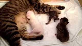Мама будит котят.