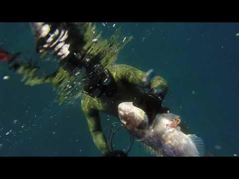 podvodni ribolov 2017