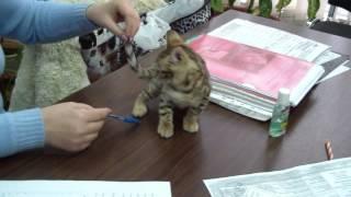 Регистрация питомника кошек в системе PCA
