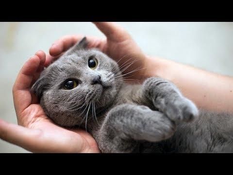 Как влияет стерилизация на кошку