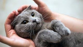 СТЕРИЛИЗАЦИЯ КОШКИ Плюсы и минусы  NEUTERING CATS