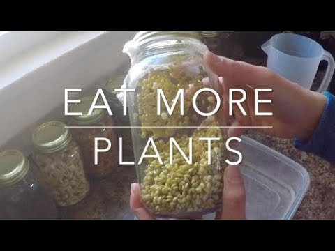 Eat More Plants | Sprouting Lentils