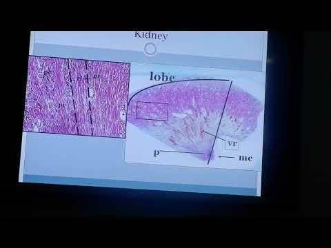 Video Histologi Oleh Dr.Azhari, DAHK