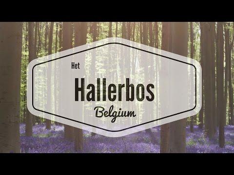 Het Hallerbos, Belgium