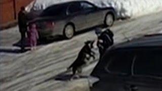 Сорвавшая С Цепи Собака Покусала Соседских Детей