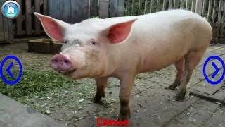 Учим домашних животных и их звуки видео для детей