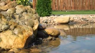 видео Облагораживание искусственного ручья на приусадебном участке