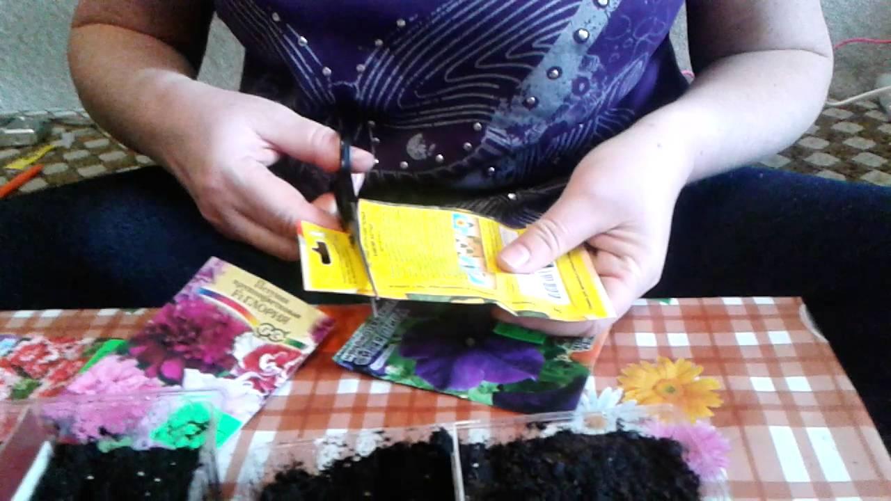 Как сажать цветы семенами фото