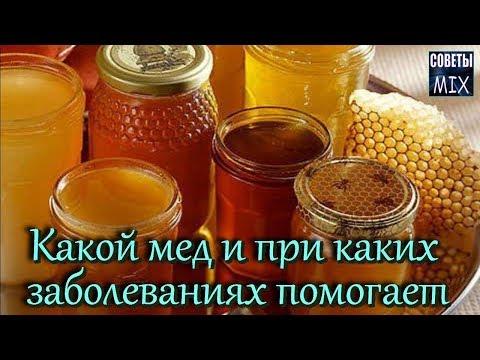 Виды меда Какой мед и при каких заболеваниях помогает Целебные свойства и польза меда