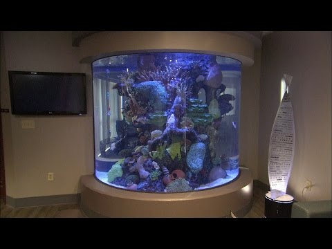 Aquarium Windows | How It's Made