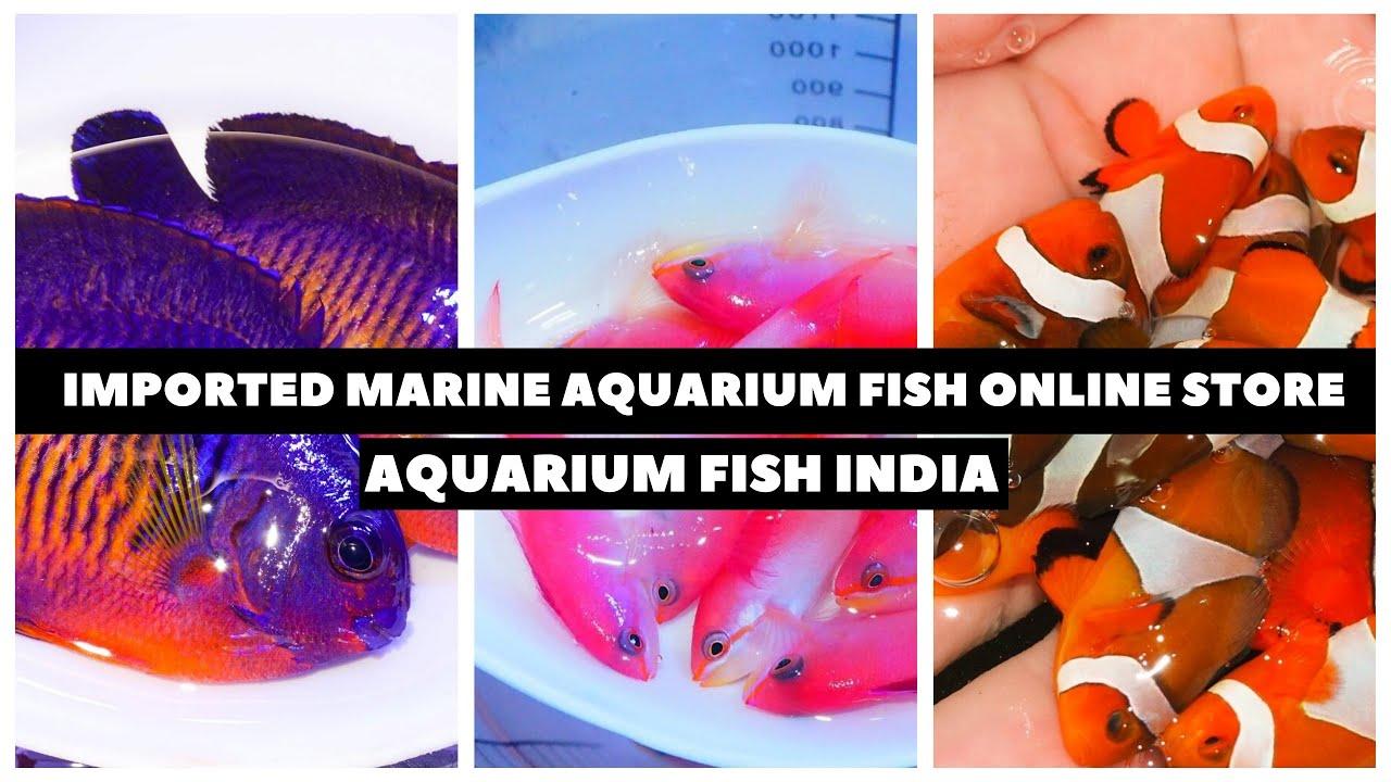 Imported Marine Aquarium Fish Wholesale Suppliers Online India