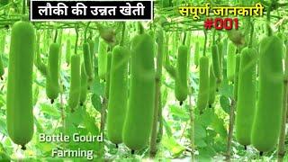 Bottle Gourd farming   लौकी की उन्नत खेती   संपूर्ण जानकारी   Louki ki kheti   लोकी की खेती कैसे करे