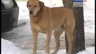 Опасность бродячих собак. Не подкармливайте!