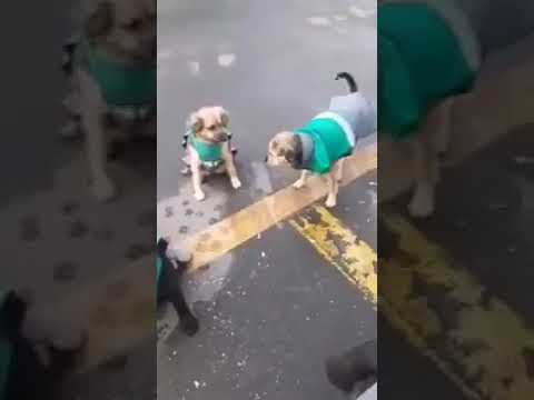 Empresa contrata a perritos callejeros para acompañar a choferes
