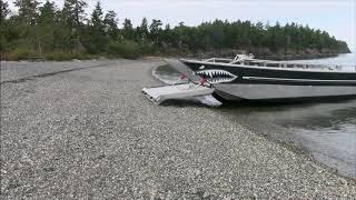 Shark walks onto beach