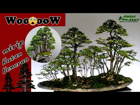 inspirasi-bonsai-grouping-alternatif-bahan-lurus