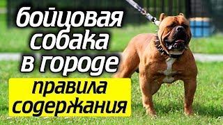 Как содержать собаку бойцовой породы! Что нельзя делать при содержание бойцовой собаки!