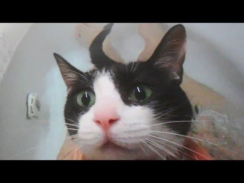 お風呂に入るとわかった時の猫の反応とお風呂タイム- Cat 'Yeah! Today is Bath time day!' -