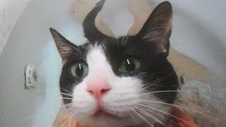 """お風呂に入るとわかった時の猫の反応とお風呂タイム- Cat """"Yeah! Today is Bath time day!"""" -"""