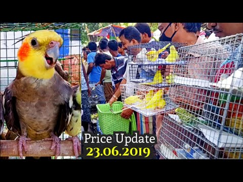 galiff-street-price-update-23th-june-2019-the-largest-bird-market-in-asia