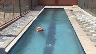 حمام سباحة وعيادة طبية وتأهيل نفسي.. فندق خمس نجوم للكلاب في الغردقة