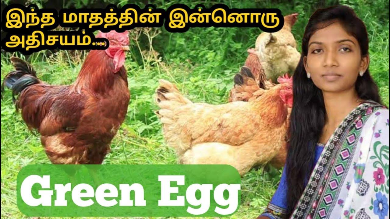 Green Egg Full Explain Tamil   Sugi Creations   Trending today ...