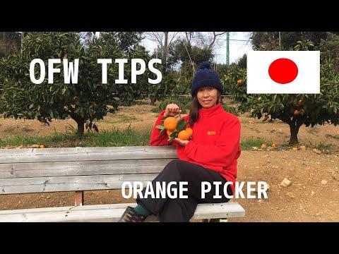 japan-ofw-tips-|-orange-picker-|-requirements