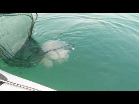 Vlog n 2   Pesca dal gommone e medusone gigante