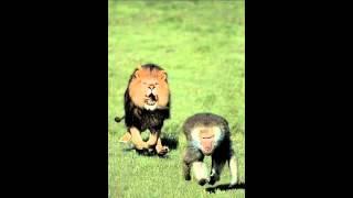 Signifying Monkey