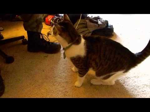 Cat Plays Fetch with Nerf Darts