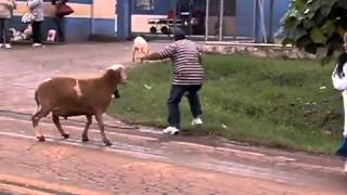 SHEEP ATTACK PEOPLE IN FRONT OF THE PRISON IN BRAZIL..CARNEIRO  possuído !