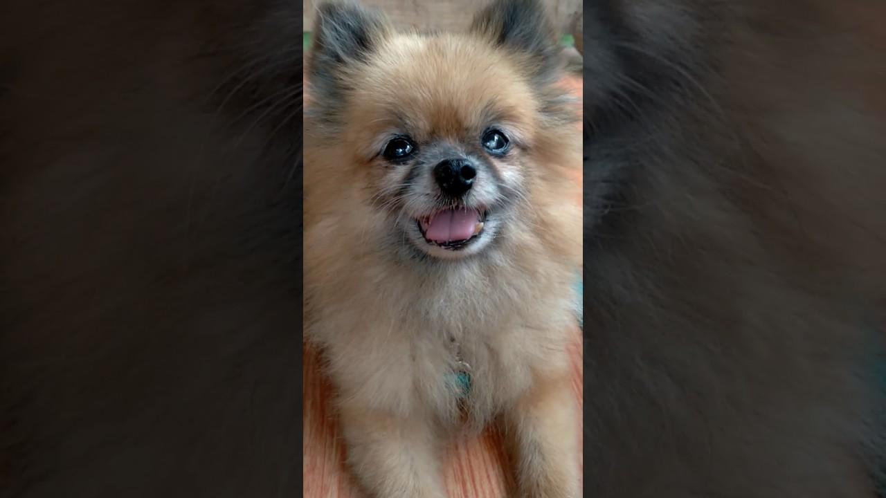 38++ Foto anjing lucu kecil terupdate