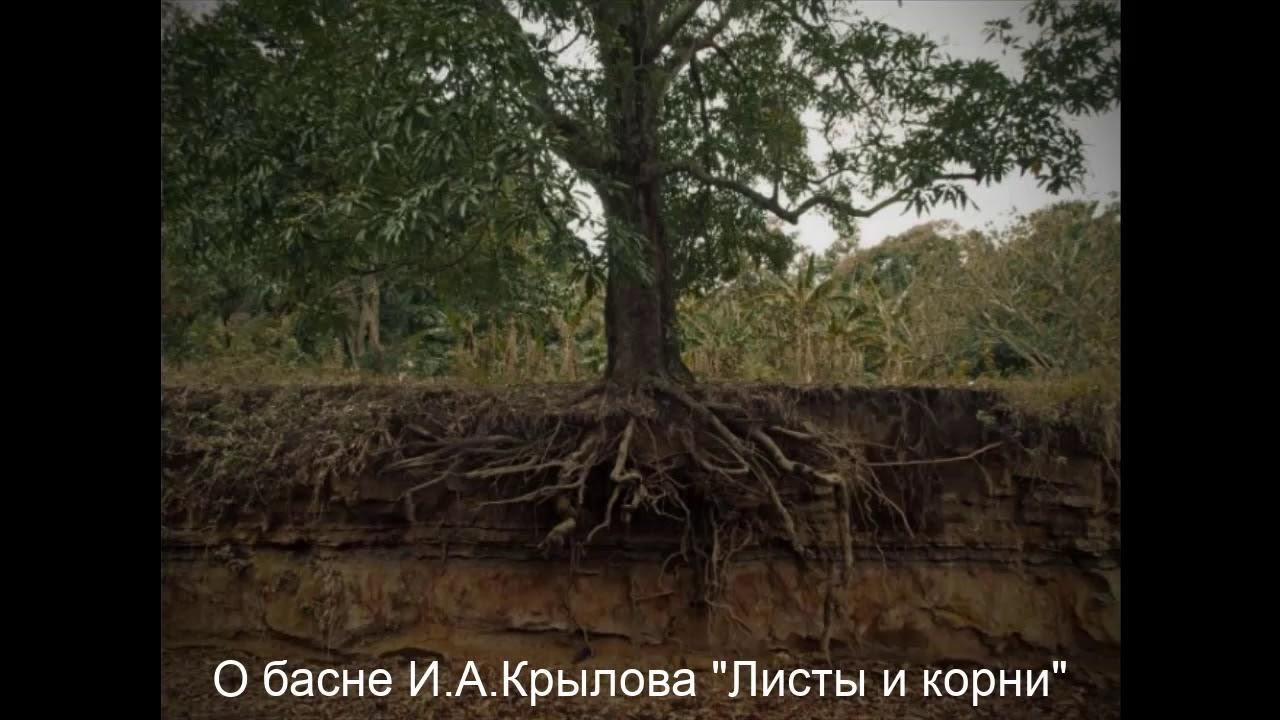 одна басни крылова листы и корни картинки тростниковые маты
