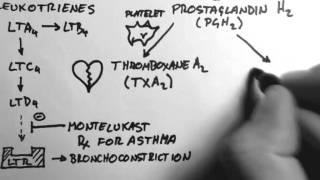 Arachidonic Acid & Eicosanoids